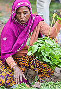 INDIA, NEW DELHI:  Beautiful Indian woman weighs her fresh greens with a balance scale as she sells vegetables in the market in New Delhi.