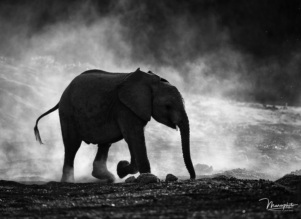 A Selection of monochrome converted images from Africa, including fauna and flora.