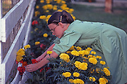 Amish girl picks flowers from homestead flower bed, Lancaster Co., PA
