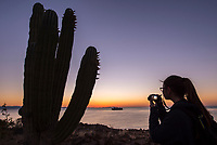 Sunrise silhouette of a Cardon Cacti on Isla San Esteban in the Gulf of California in Baja California Sur, Mexico.