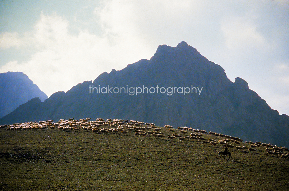 Sheepherder with herd, Tien Shan Mountains, Kyrgyzstan, Russia