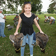 A group of volunteers, led by members of the Kentucky Department of Fish and Wildlife Resources, corral a group of Canada geese at Jacobson Park in Lexington, Ky., on Tuesday July 1, 2014. Around 500 geese were banded at the park and at a farm in Fayette County as part of a population study. Each year at this time in various locations around the state, when the geese are molting and unable to fly, they are rounded up, banded, their genders identified and quickly released. Photo by David Stephenson