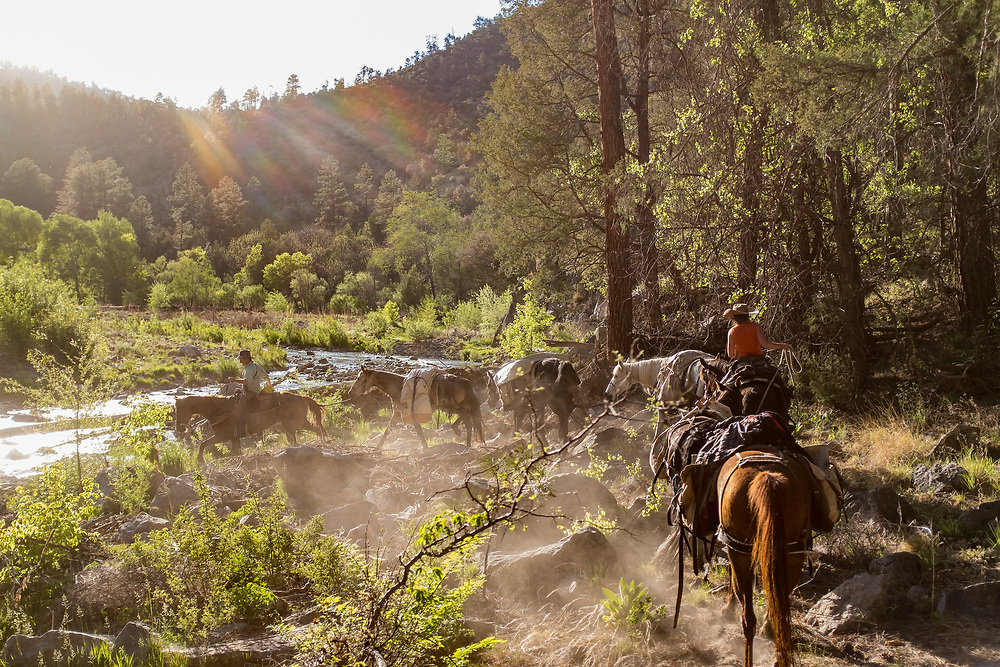 2017 MAY 11: Horse pack trip into the Gila Wilderness in southern New Mexico. In search of the elusive Gila Trout.