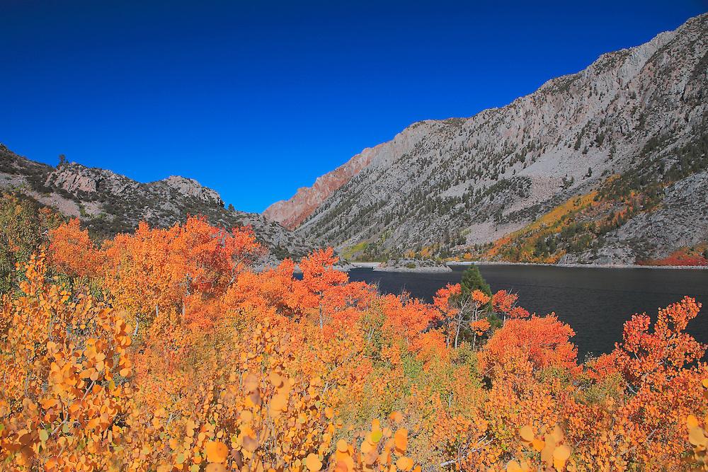 Lake Sabrina Golden Aspens - Fall Color