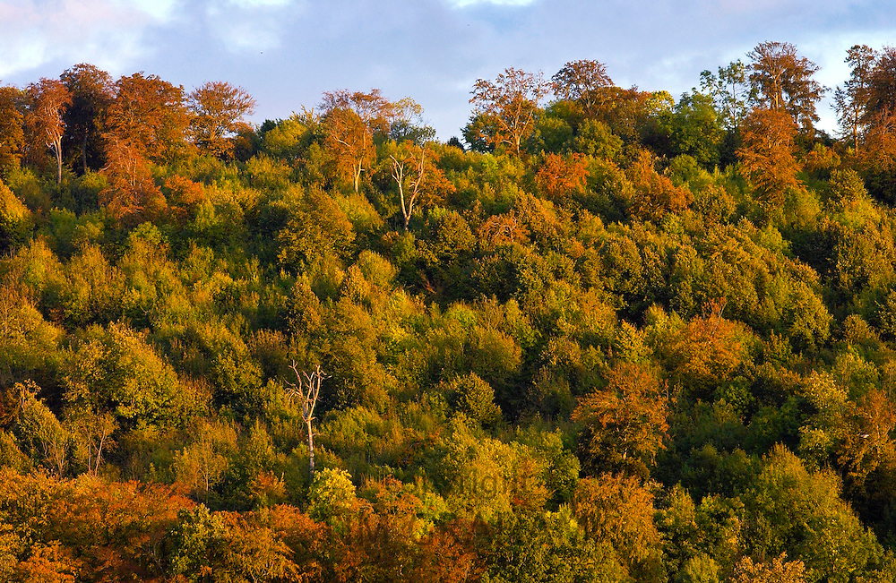 Treetops at the beginning of autumn in Marlow, England