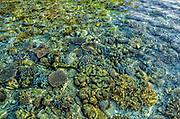 Shallow Coral Reef<br /> Ceram Island<br /> Banda Sea<br /> Indonesia