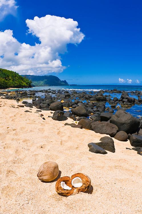 Coconuts on Hideaways Beach, Princeville, Island of Kauai, Hawaii