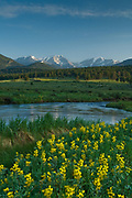 Golden banner line the Big Thompson River as it winds through Moraine Park, Rocky Mountain National Park, Colorado.