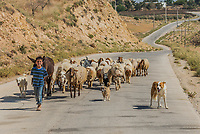 Al-Beidha, Jordan - May 9, 2013: young shepherd boy and flock of sheep near Al-Beidha in Jordan middle east on may 9th, 2013