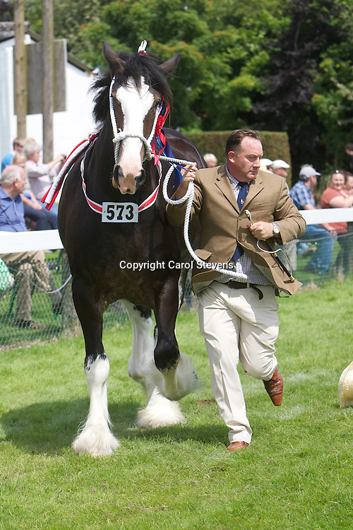 Martin Fountain's bay mare  Woodhouse Calendar Girl<br />