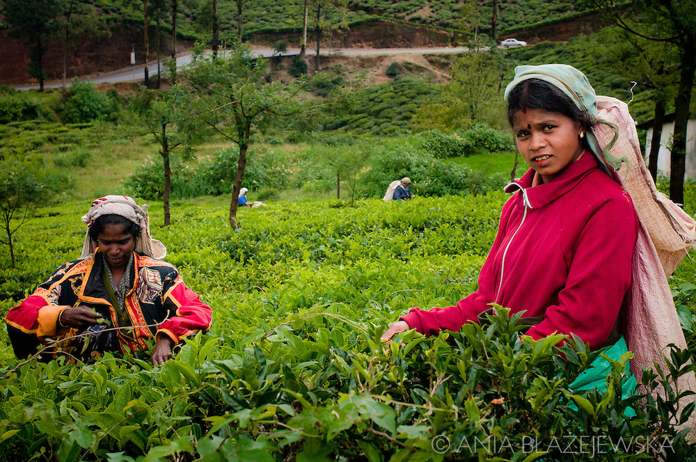 Sri Lanka, Nuwara Eliya. Tea pickers at work.