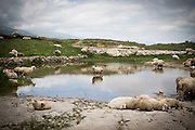 A flock of sheep rest near a natural pond on top of a remote plateau.<br /> <br /> Located in the North Caucasus, bordering the Caspian Sea and a Republic of Russia, Dagestan is home to almost 3 million mostly muslim people. Ethnically very diverse, it is made up of several dozen ethnic groups and is Russia's most heterogeneous republic, where no ethnicity forms a majority.<br /> <br /> From 2000 until late 2012 Dagestan was subject to a violent Islamic separatist movement that spilled over from neighbouring Chechnya but has now been largely controlled by the Russian Government.<br /> <br /> Now relatively peaceful Dagestan (which means Land of Mountains) remains one of Russia's untouched treasures receiving few visitors. Due to its relative isolation, this beautiful mountainous region has maintained its traditional cultures that have been lost in many other parts of Russia.