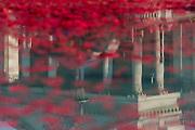 Silence in the Square oraganised by the British Legion in Trafalgar Square  - 11 November 2016, London.