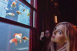 "© Licensed to London News Pictures. 18/01/2018. LONDON, UK. A girl views ""Aquarium"" by Benedetto Bufalino & Benoit Deseille.  A BT phone box has been converted into an aquarium with live goldfish in Earlham Street, Seven Dials.  Opening night of Lumiere London, the capital's largest arts festival commissioned by The Mayor of London and produced by Artichoke.  Light installations by leading artists have been set up, both north and south of the river for the public to view 18-21 January. Photo credit: Stephen Chung/LNP"