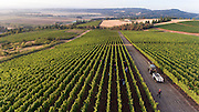 2016 harvest at Cristom, Eola Amity Hills, Willamette Valley