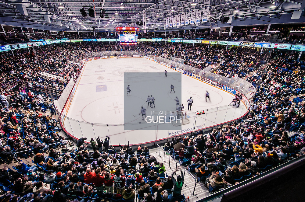 The Guelph Storm celebrate in the corner after they just scored a goal against the London Knights during OHL regular season play at a sold out Sleeman Centre, downtown Guelph Ontario.  They went on to win the game 7-5.  Photo by Andrew Goodwin