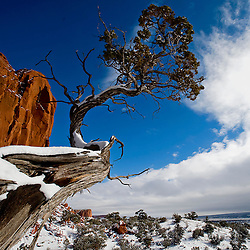 120908     Brian Leddy.A juniper tree juts into the sky near a section of red rock near Continental Divide on Tuesday morning. The area's higher elevation meant that it received an inch or two more snow than the surrounding area.