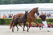 Excellent Dressage Sales<br /> Longines FEI/WBFSH World Breeding Dressage Championships for Young Horses 2016<br /> © DigiShots
