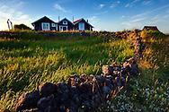 Sunlit grass, Iceland