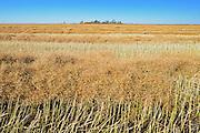 Canola swaths<br /> Abermathy<br /> Saskatchewan<br /> Canada