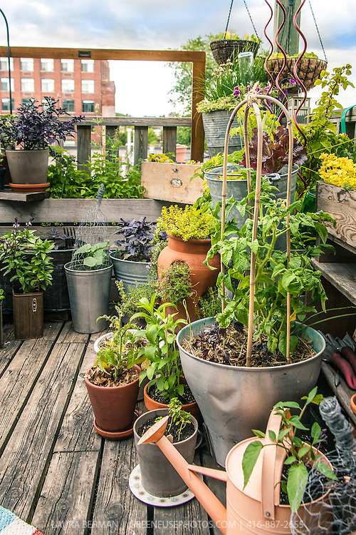 A variety of herbs and vegetables in a container garden on an urban rooftop.