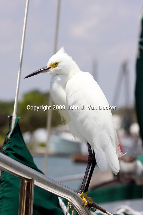 Snowy Egret standing on a sail ship
