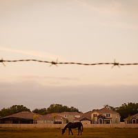 ORLANDO, FL -- A horse grazes along a development in Orlando, Fla., on Friday, January 27, 2012. As the Florida Primary approaches, the voters along the I-4 corridor are becoming an increasingly more important path to securing a win.  (Chip Litherland for The New York Times)