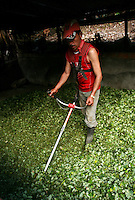 A worker cuts up coca leaves at a lab for processing coca leaf into coca paste, in a remote area of the southern Colombian state of Nariño, on Monday, June 25, 2007. Although government efforts to eradicate coca have reached many parts of Colombia, still the coca business thrives. (Photo/Scott Dalton)