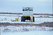 Tundra buggy to view polar bears<br />