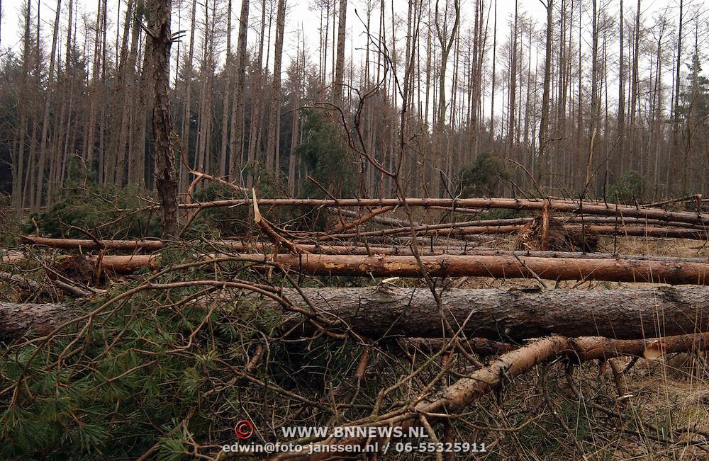 Omgehaalde bomen in het Spanderswoud door St. Naardickland