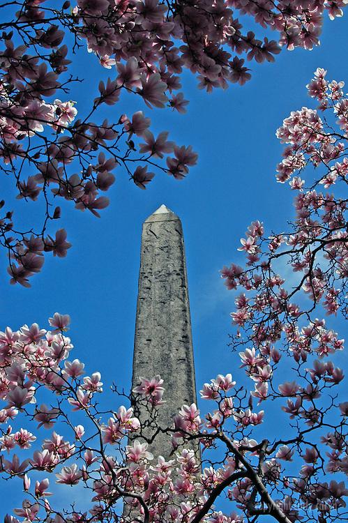 Egyptian Obelisk framed by blossoms