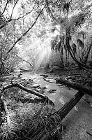 Fakahatchee Strand Preserve State Park, everglades gallery johnbobcarlos johnbob Big cypress