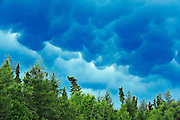 Mammatus clouds brooding over northern boreal forest<br /> 80 kms north of Sioux Lookout<br /> Ontario<br /> Canada