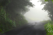 Thick fog on country road