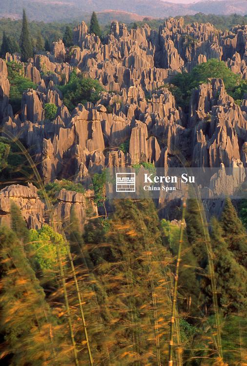 Landscape of limestone pillars under sunset light, Stone Forest, near Kunming, Yunnan Province, China