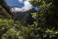 Sunny view of Laurisliva forest in Madeira