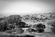 Mist rises at dawn, Hluhluwe-Imfolozi Game Reserve, KwaZulu-Natal province of South Africa.