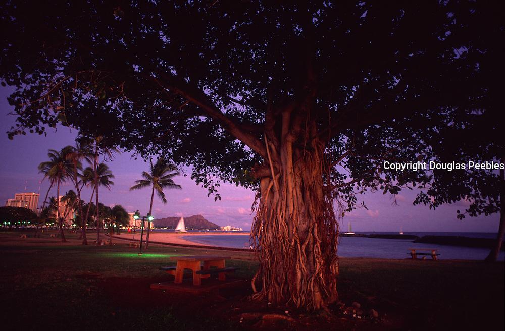 Banyan Tree, Ala Moana Beach Park, Oahu, Hawaii<br />