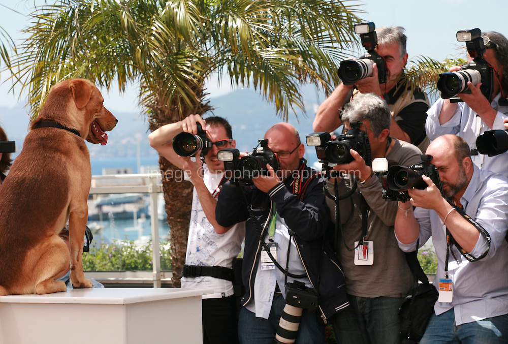 Hagen the dog with photographers at the photo call for the film White God (Feher Isten) at the 67th Cannes Film Festival, Saturday 17th May 2014, Cannes, France.