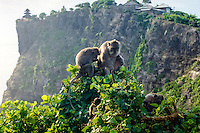 Bali, Badung, Uluwatu. The monkeys at Uluwatu are entertaining, but watch your belongings! The temple in the background.