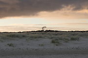 Studland beach and dunes. Dorset, UK.