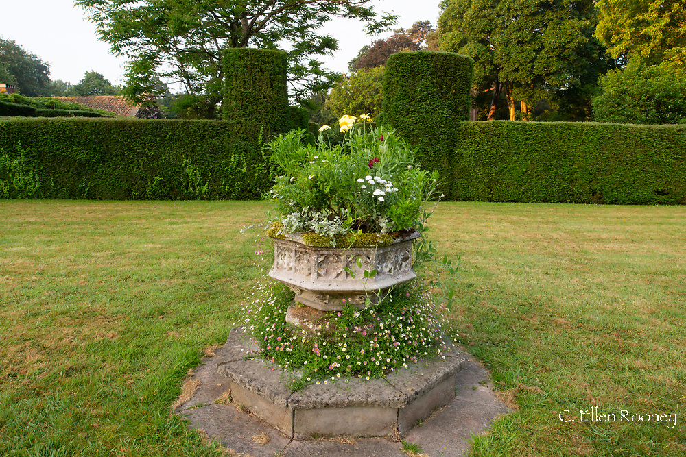Erigeron growing around a stone font on the lawn at Cothay Manor, Greenham, Wellington, Somerset, UK