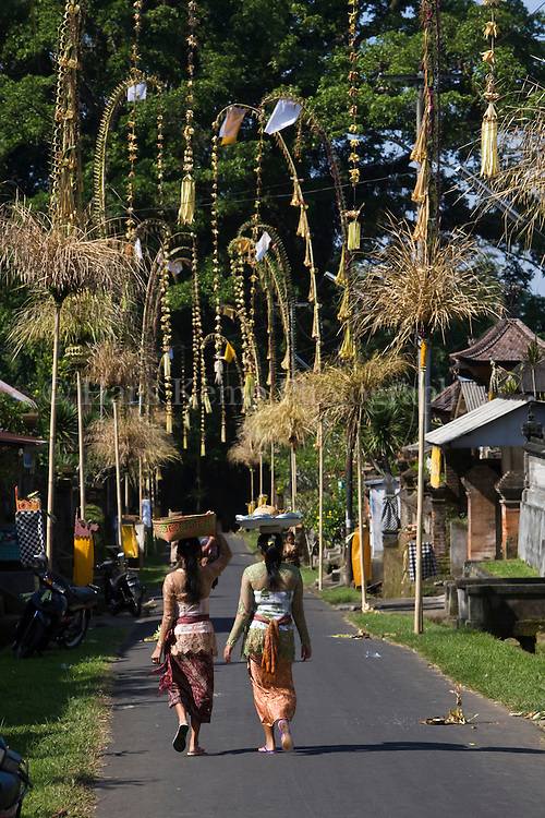 Penjors erected for Galungan along village roads near Ubud, Bali