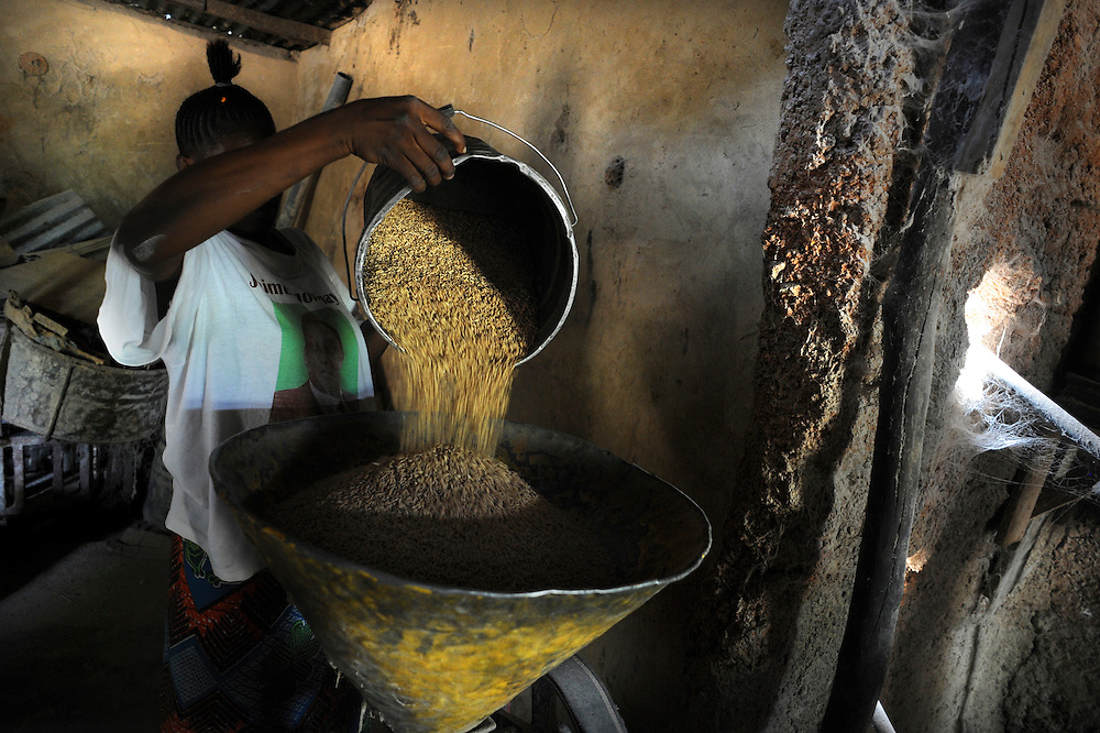 Benin February 25, 2008  African farm labourers use machine as they separate grains of rice from the husk at a grain market in Natitingou.