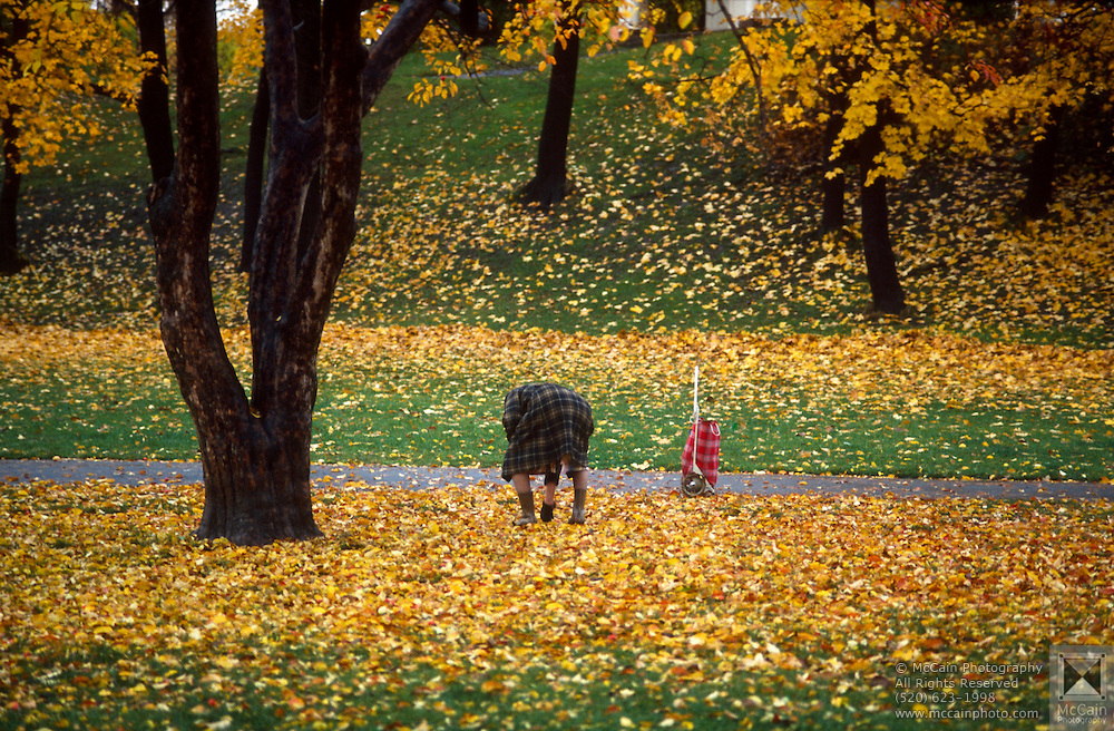 Woman picking up apples in leaves, Frogner Park, Oslo, Norway..Media Usage:.Subject photograph(s) are copyrighted Edward McCain. All rights are reserved except those specifically granted by McCain Photography in writing...McCain Photography.211 S 4th Avenue.Tucson, AZ 85701-2103.(520) 623-1998.mobile: (520) 990-0999.fax: (520) 623-1190.http://www.mccainphoto.com.edward@mccainphoto.com