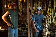 Tobacco Migrant Work
