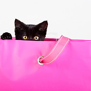 adorable black kitten peeking out of pink gift bag present