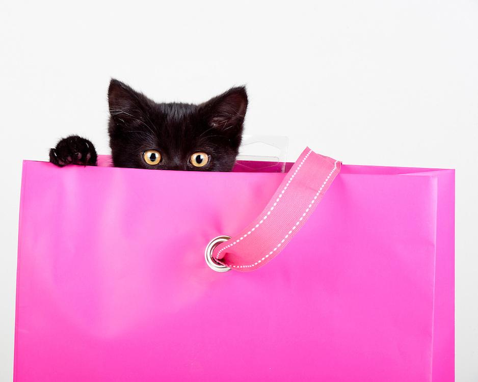 adorable black kitten peeking out of pink gift bag present