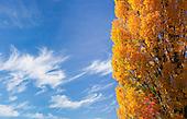 Autumn Colour Images