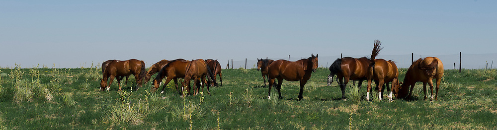 Horses along a road near Black Mesa State Park in far northwestern Oklahoma panhandle.